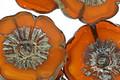Czech Glass Summer Squash Hibiscus Coin 22mm