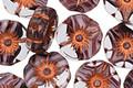 Czech Glass Bronzed Grape Fizz Hibiscus Coin 12mm