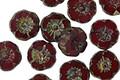 Czech Glass Merlot Picasso Hibiscus Coin 8mm