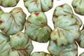 Czech Glass Sweet Mint Picasso Maple Leaf 10x13mm