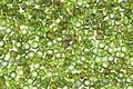 TOHO Frosted Transparent Peridot Picasso Hybrid Round 11/0 Seed Bead