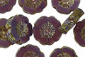 Czech Glass Lilac Picasso Hibiscus Coin 12mm