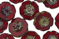 Czech Glass Garnet Picasso Hibiscus Coin 12mm