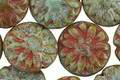 Czech Glass Sage Green Picasso Dahlia Coin 14mm