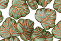 Czech Glass Bronzed Prairie Green Maple Leaf 10x13mm