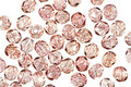 Czech Glass Luster Transparent Topaz/Pink Fire Polished Round 4mm