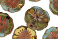 Czech Glass Mint Chocolate Picasso Hibiscus Coin 15mm