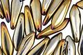 Czech Glass Iris Brown Dagger 5x15mm