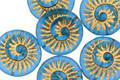 Czech Glass Matte Capri w/ Gold Ammonite Coin 18mm