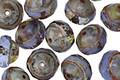 Czech Glass Milky Light Sapphire Picasso UFO 7x9mm