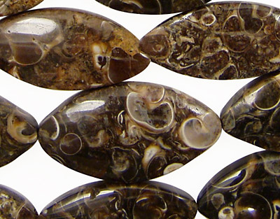 Turritella Agate Horse Eye 21-32x11-16mm