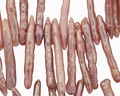 Angel Skin Pink Biwa Stick Top-Drilled 21-36mm