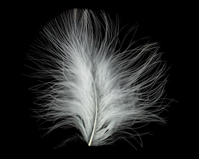 Ivory Marabou Feather 100-152mm