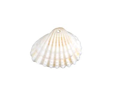 White Arca Shell Focal 16-27x13-21mm