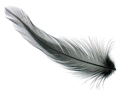 Ebony Neck Hackle Feather 100-152mm