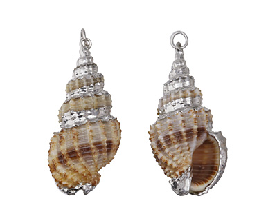 Banded Cinerea Shell Pendant w/ Silver Finish 15-21x30-47mm