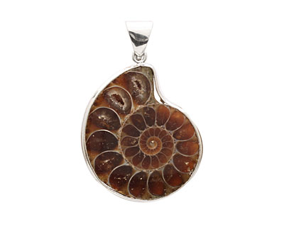 Ammonite Silver Wrapped w/ Bail Pendant 20-32x28-40mm