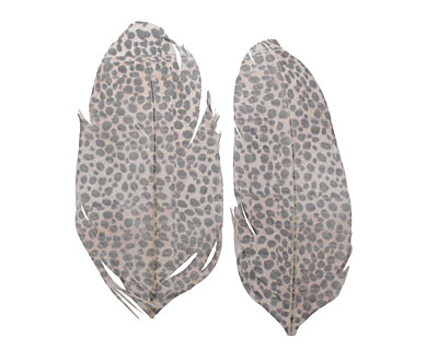 Leopard Printed Feathers