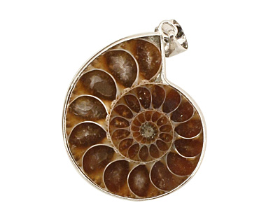 Ammonite Silver Wrapped w/ Bail Pendant 28-35x38-47mm