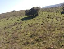 Rural - Rosário do Sul