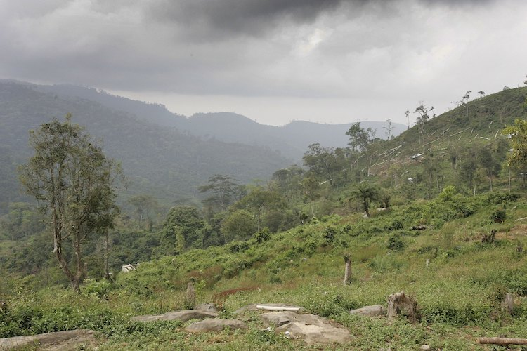 Deforestation in Sierra Leone, 2006