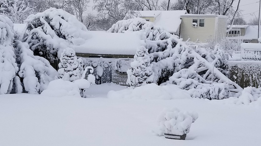 Tree damage from heavy snow in Babylon, NY, on 3/21/2018