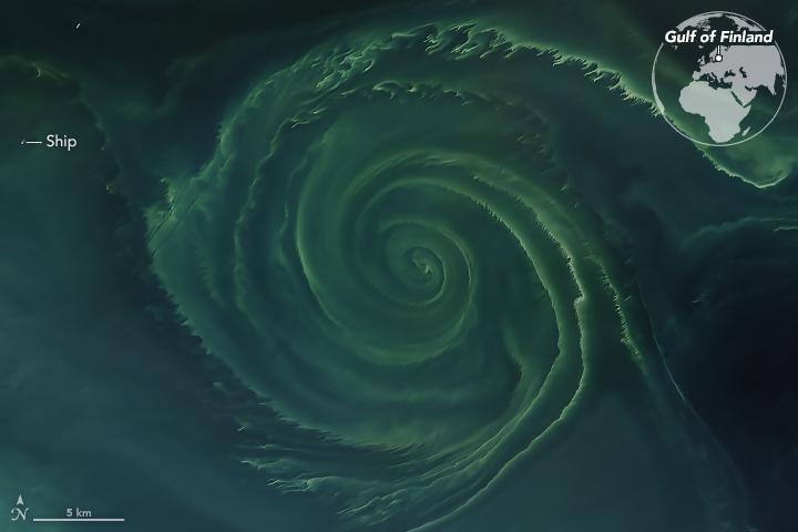 Baltic Sea algae