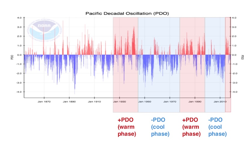 NOAA reconstruction of PDO with warm & cool phases shaded
