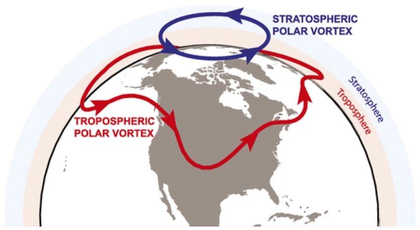 The two types of polar vortex