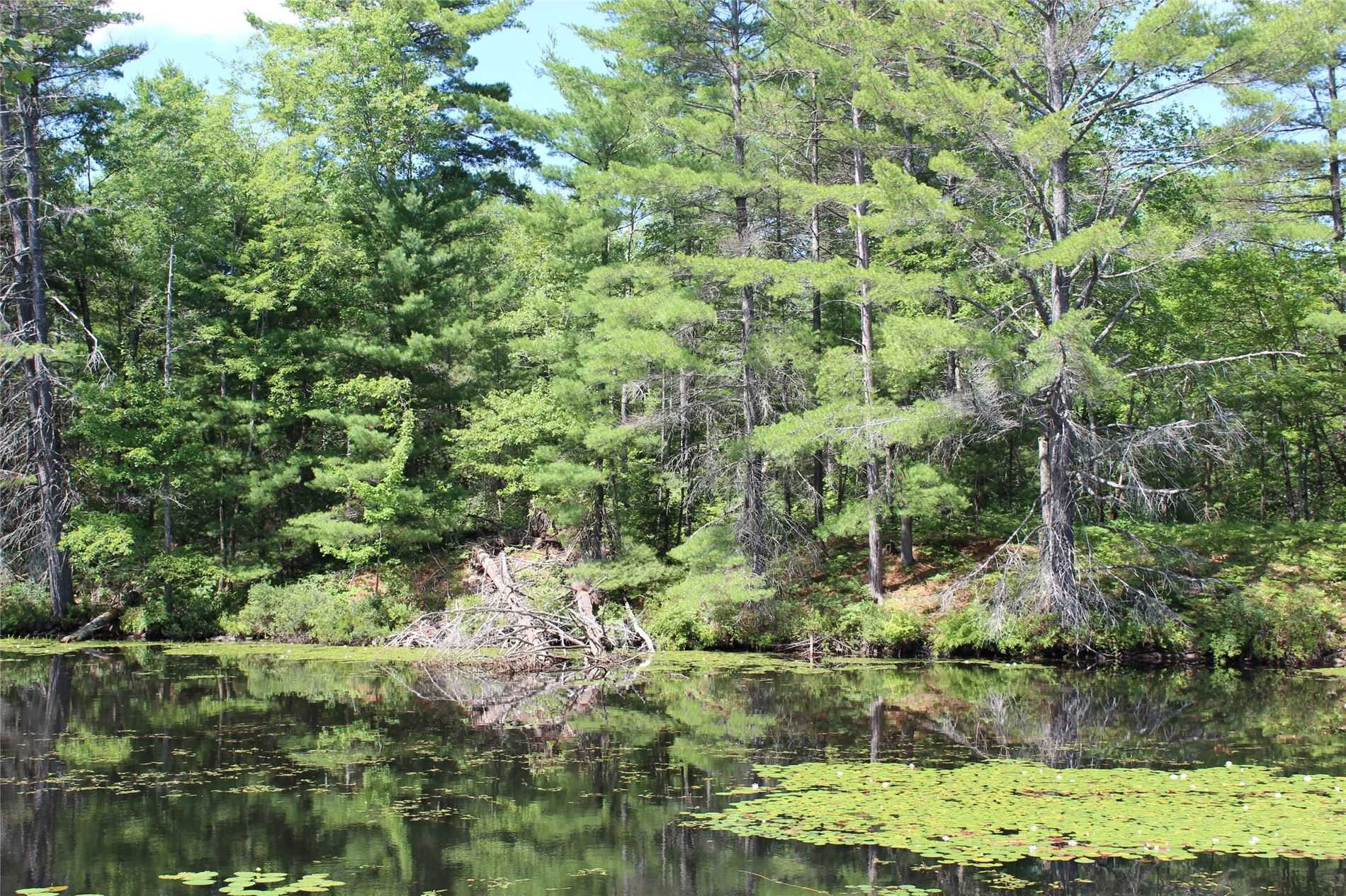 11.179 Acres (As Per Mpac) Of Vacant Land With 965.13M (As Per Mpac) Of River Frontage On Head River (Locally Known As Fishog River), Close To Queen Elizabeth Ii Wildlands Provincial Park, Minutes By Boat To Fishog Lake And Backing Onto Thousands Of Acres Of Crown Land, This Property Is Ideal For A Hunting Cabin Or Potential Cottage. Wildlife Abounds And Fishog Lake Has Bass And Muskie. This Is A Fantastic Opportunity For Those That Love The Outdoors.