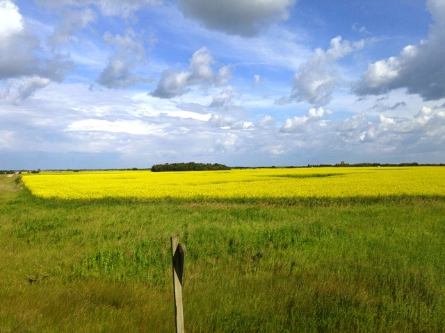 Agricultural land east of Tofield adjacent to HWY 14. HWY and CN Railway run through this property. Total of 138.36 ares with some #2 soil, good #3 soil and pasture land. Includes surface lease revenue of $2250 per year. Municipal waterline available to property. Approximately 35 minutes east of Edmonton and Sherwood Park.