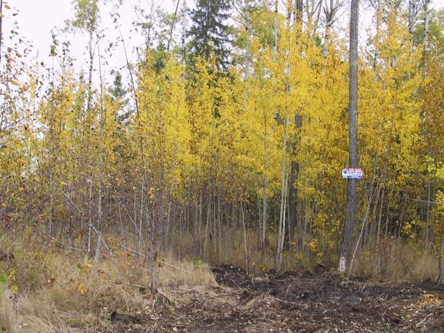 Atim Creek Springs. Country residential subdivision; private, treed and paved. Low pressure sanitary sewer system (to property line). Water to be well or cistern (supplied by buyer). Power & telephone to the property line. Gas prepaid to house (2006 rates). Restrictive covenants apply with building guidelines. Homeowners association. Minutes to Spruce Grove with schools, tri-municipal facility, shopping, medical and full services. A treed lot in a cul-de-sac with a unique building pocket. A prime lots in prestigious Atim Creek Springs. Seller is a licensed REALTOR. GST included in the price on the re-sale. Informal HOA committee and maintenance of trails.