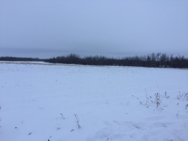 96.02 Acres located right on the pavement just 9 km from Ryley on Highway 854 North. Perfect place to build your dream home or expand your current farming operation. Services are at the road and G.S.T will be applicable. Only 10 mins to Tofield and 20 mins to Vegreville.