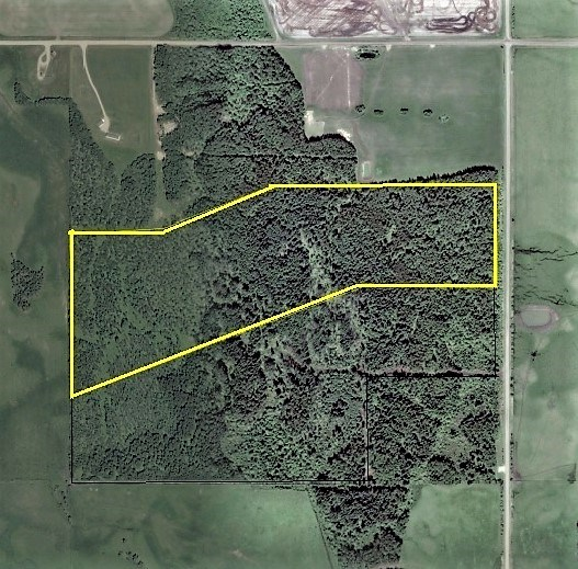 45 acres beautifully treed with native species of spruce, pine, poplar, birch and willow. Ideal weekend retreat or build your dream house.