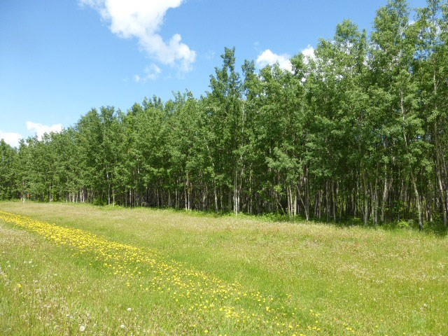 Build your dream home on this beautiful well treed 2.5 acres of land located at Kerr Cape Estates at the north shore of Pigeon Lake.