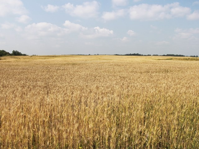 160 acres of farm land located south east of Ryley.  Approximately 112 acres cultivated and 40 acres pasture.  Nice private building site.  Current crop goes to current renter.  Situated 5 miles south of HWY 14 on Range Road 171.  Welcome home!