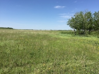 80 acres of pasture on corner of RR 152 and TWP 480, south of Bruce. Was previously rented but has been rested for last 3 summers. Fenced with dugout on North West end. Perfect opportunity to start your hobby farm.