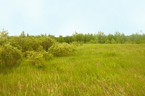 Beautiful acreage lot just outside of Millet, perfect to build your dream home.  Restrictive covenant in place to protect your investment!  The lot is 3.63 acres and is an easy commute to Leduc, Nisku, Wetaskiwin and Edmonton, GST may be applicable.