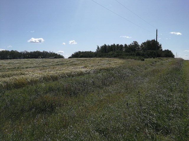 Triangular shaped parcel of trees and open space NE of the Village of Ryley.  15.66 acres adjacent to former railway from days gone by.  Only 1.5 miles south of paved Highway 626.  Nice building site (former yard site).  Bring your horses! Welcome home!