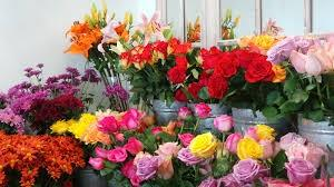 Well established flower shop located in busy NE shopping centre. Lots of walk-by people traffic that buy potted plants and Floral arrangements. Net income owner/operator $ 50k-$60k/year.  Daily sales on weekdays  range from $300-$700/day and on weekends can range from $1000-$3000/day. Gross Sales for 2018-19 was $ 134K.  Has 13'x15'? walk-in flower refrigerator. No extra rent charge for displaying plants in mall aisleway, where people can?t help but buy a plant when walking by.  Presently require only 1 fulltime employee making this business ideal for Owner/operator. Potential increase in sales by selling Fresh Floral Arrangements.