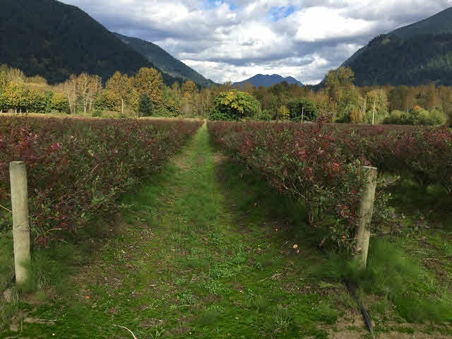 39.79ac Blueberry farm, include two dwelling (Main House + mobile home) monthly rent income $2100. approx. 30ac palanted,17ac duke, 6ac blue crop, 6ac duke and some Elliot. Drip irrigation system. New shipping container put in for pump house. House has new roof. Field is set up for machine pick.