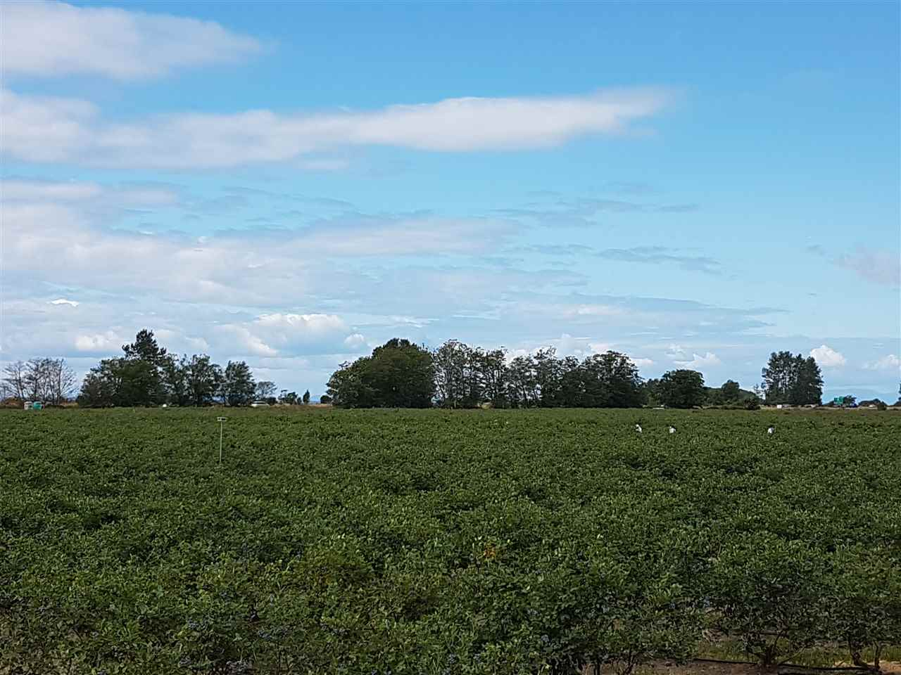 Established 39.29 acres Blueberry farm in prime Surrey location. In 2016 approximately 350,000 LBS of blueberries were produced. This farm includes 2 varieties of blueberries, Bluecrop and Duke. Property includes a 4 Bedroom/3 Bathroom rancher, two 40 x 60 sheds, a pump house with full drop irrigation and fertilizer injector system. There is also a 1,000 gallon storage diesel tank. Easy access to the Highway #99 and #10 and is close to the USA-Canada Border. Outstanding opportunity here! Inquire for more details.