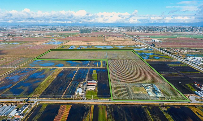 Amazing, high producing 49.209 acre blueberry farm in Cloverdale. The field is professionally maintained and is currently planted in the top three popular blueberry varieties of Duke (12.5 Acres), Bluecrop (27.5 Acres) and Elliot (8 Acres)! Along with the existing 3,000 square feet home, you have the option to build a new home on a ready to go preload pad. The property is minutes away from Morgan Creek, the USA-Canada Border Crossing and has great access to Highway #15 (176 Street). Excellent location as it is close to all amenities!