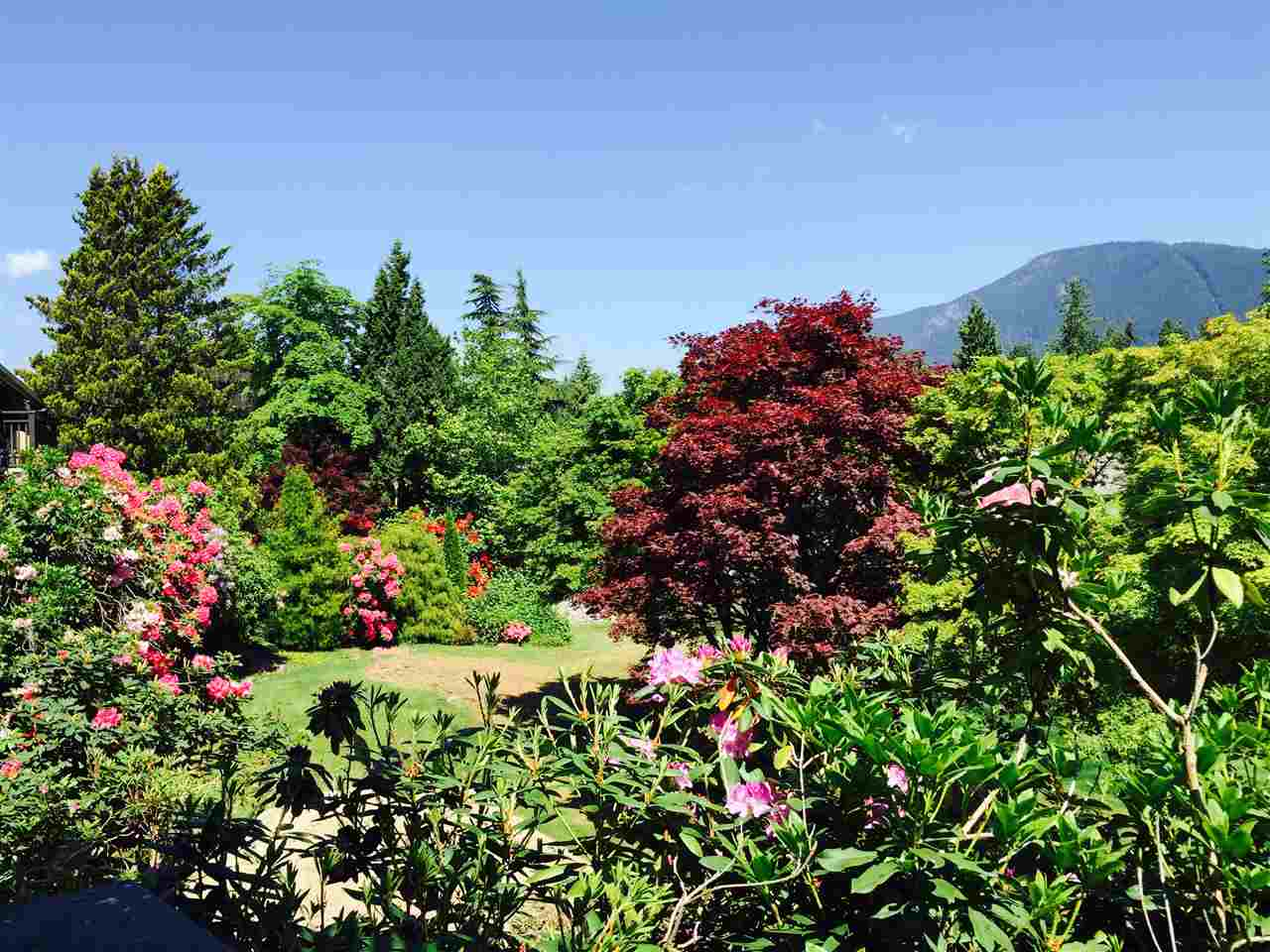 WOW WHAT A VIEW! Situated in the best part of the complex, facing gardens & Grouse Mountain, this feels like a townhome! Well laid out & a well-managed complex that has had numerous upgrades over the past 7 years including newer roof, decks, drainage, &  foundation /infrastructure. Newer renovations include smooth ceilings, stainless steel appliances, upgraded electrical panel with in-suite laundry & an extended kitchen featuring solid wood cabinets, quartz countertops & stone backsplash. Solid Hardwood floors, a large deck to enjoy the view & outdoor pool! Steps to the bus stop, Hwy 1, shopping/amenities of Westview plaza & Edgemont Village. Larson Elementary & Delbrook Community Centre. Parking, storage, heat, hot water & cable included; pet friendly! Call for your private showing.