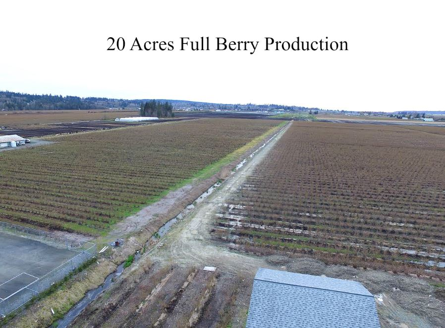 One of the Best Matured blueberry farm in Cloverdale, approx. 20 acres major variety of Bluecrop. Full production crop, drip irrigation system, on truck route 176 street. Newer 24'x24' shed build in 2012. A-1 zoning eligible to build mega home plus lots of room for truck parking on the property. Close to Pacific Highway Canada-US border crossing, and short drive to Cloverdale with shopping, dining, recreation and all amenities. All machinery available, but not included. Great property at an excellent price!! For more info & exclusive showings call.