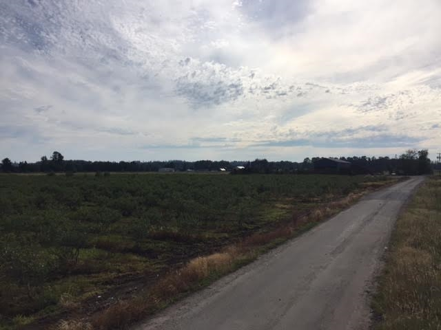 9.02 Acres near shopping, schools, airport & transit, city water. Features fully planted in mature blueberries, with a majority of Duke variety, and some Elliott & Blue Crop varieties too! Amazing building site with potential view of Mount Baker & blueberry fields.