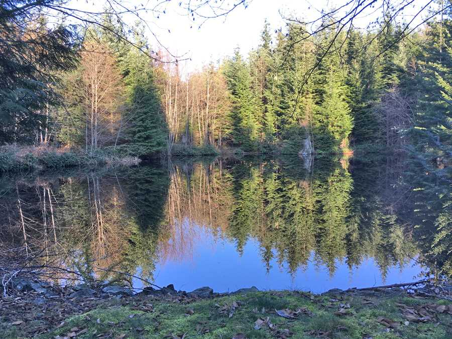 First time offered on MLS, this is a very special and charming 2.7 acre property. the south facing and elevated house site overlooks a serene and picturesque setting complete with it own large private pond ringed here and there with Fir and Alder. Located close to the golf course and only a 10 minute drive from the ferry and shops in Snug Cove, this lot is not far from the wonderful amenities of Bown Island but enjoys the privacy of a secluded get - away.