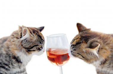 Cats drinking wine