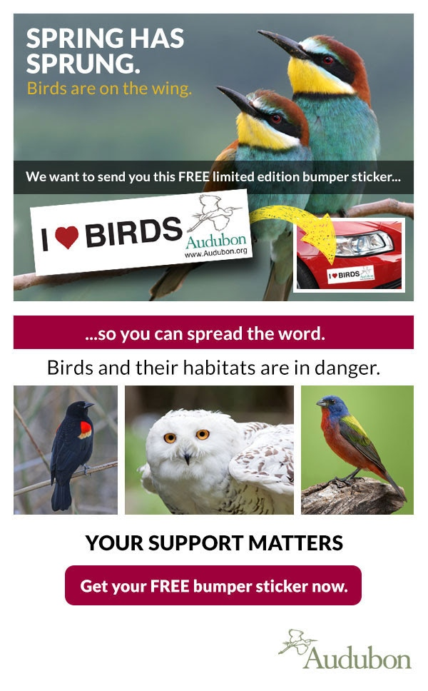 Please enable images. SPRING HAS SPRUNG. Birds are on the wing. We want to send you this FREE limited edition bumer sticker...so you can spread the word. Birds and their habitats are in danger.