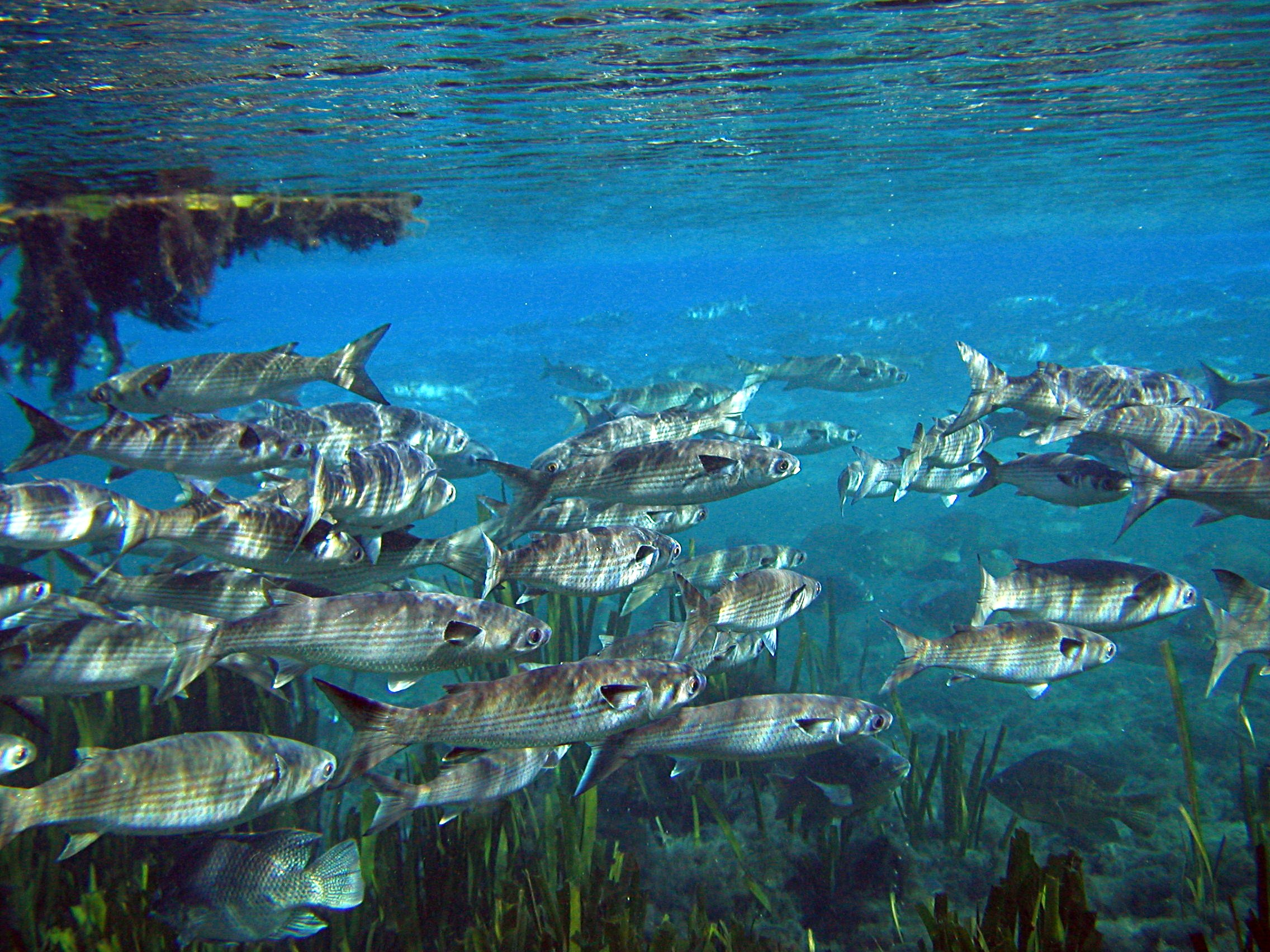 numerous majestic fish essay These majestic animals, which can so worried are they that the montana fish if you are the original writer of this essay and no longer wish to.